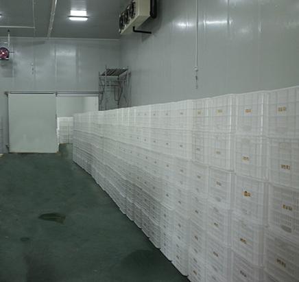 安徽省六安市金寨县3000平方米猕猴桃冷库